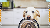 The Best Canned Dog Food To Buy in 2021