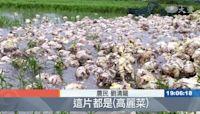 南台灣暴雨 多處淹水農損增加