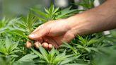 墨西哥離為大麻「全開綠燈」更近了!一覽 2021 年有望通過大麻合法化 3 國家