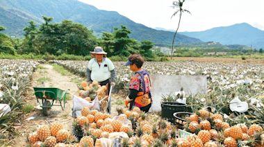 鳳梨事件反思 謝金河:台灣亟待重建食品加工產業鏈