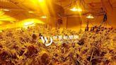 華州購屋種大麻運紐約 華男面臨終身監禁刑期