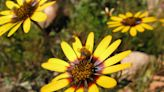 A third of flowering plants would produce no seeds without pollinators