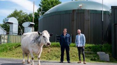 比特幣太耗電?英國農民表示用「牛糞」發電來挖礦就沒這問題了