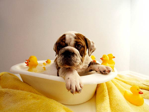 Dog boarding, canine bathing