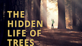 'The Hidden Life of Trees' Review: A Cyclical Documentary About Our Roots and Life - Hollywood Insider