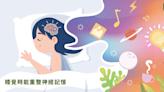 愛放空、睡覺的人更聰明 研究:大腦神經運作更快