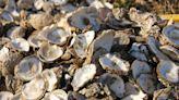 S. Korea's POSCO, Hyundai to use oyster shell waste for steelmaking - EconoTimes