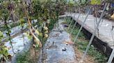 獨家》渴死了!日月潭頭社水庫乾涸 破41年來最低水位紀錄