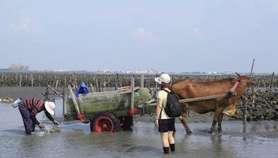 彰化「海空步道」正夯 媽祖節、海牛節取消地方哀號