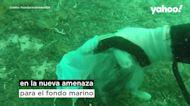 VÍDEO | Aparecen multitud de mascarillas y guantes usados bajo las aguas de la Costa Azul francesa