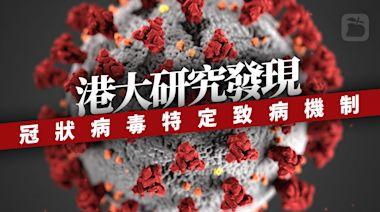 香港大學研究揭冠狀病毒特定致病機制 助覓抗新冠肺炎治療方向   蘋果新聞網   蘋果日報
