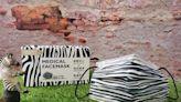 首波限量1萬盒!萊潔最新「斑馬紋」口罩來了 1/23萊爾富搶先賣