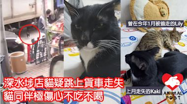 急尋貓貓 深水埗店貓Kaki疑跳上貨車走失 貓同伴極傷心一度不吃不喝