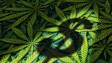 【食力】大麻合法化帶動商機,市場預估全球市值5年內將成長300%!