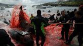 逾1400隻海豚遭屠殺 丹麥法羅群島傳統狩獵活動挨批
