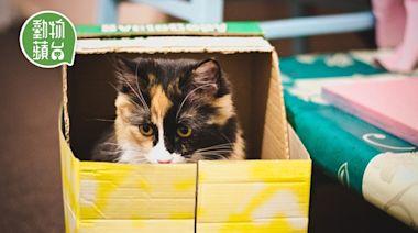 貓行為|龍床都不及紙箱? 拆解貓咪偏愛紙箱三大原因 | 蘋果日報