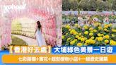 【香港好去處】大埔綠色美景一日遊 七彩藤棚+賞花+超型植物小店+一級歷史建築