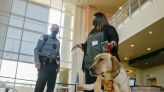 Courthouse canine starts new job in Santa Fe