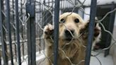US bans import of pet dogs from over 100 countries