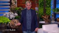 Ellen Found Portia 'on the Floor on All Fours' Before Emergency Surgery