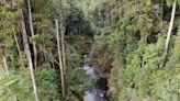 登山超紅景點「水漾森林」 調查評估對下游無潛在危險