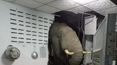 泰國野生象闖民居「爆牆」搵食 屋主「幾乎日日都嚟」