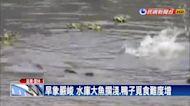 烏龜、鯉魚好渴! 水庫旱象爆生態危機