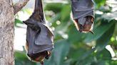 中國爆首例18個月前 傳武漢科學家擬讓蝙蝠感染病毒