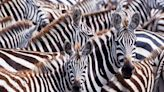The most eye-catching and colourful wildlife experiences in the world
