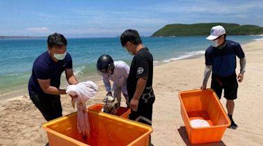 澎湖低調海龜野放 專家:人群減少有助萬物生養