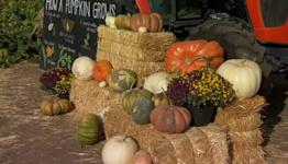 Dakota Acres bringing Halloween spirit to your front door