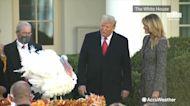 President Trump pardons Corn the turkey