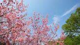 春暖花開賞花去!陽明山、日月潭、阿里山等 5 大賞花、美拍景點推薦