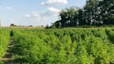 Humboldt Farms' Cannabis Coming To A Dispensary Near You: Unrivaled Brands Will Exclusively Distribute California's Renowned Grower