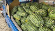 50年來最便宜 西瓜1公斤跌到剩5元