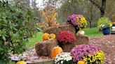 FLOWER FRIDAY: Fun Fall displays and flowers continue to bloom