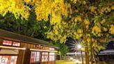 6月必看花卉 全台8處阿勃勒景點~最美最好拍黃金花雨在這裡!