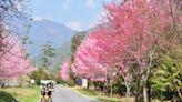 全台五大熱門賞櫻景點行程推薦!武陵櫻花季、阿里山鐵路賞櫻 二日遊最低 2000 有找