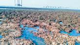 學者醫師幫忙拚公投! 藻礁聯盟明起推動15場線上講座