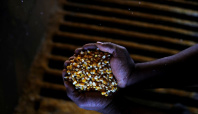 Brazil government warns of frosts in corn and wheat areas