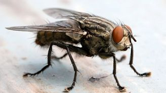 How HALF of all flying insects found in NHS hospitals carry superbugs