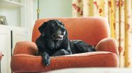 How return to normal will impact pet ownership