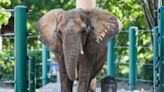 Rare elephant calf, two-headed rattlesnake, another quake off Oregon: News from around our 50 states