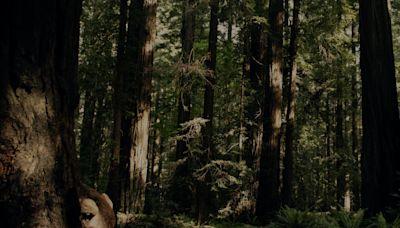'Sasquatch': Duplass Brothers' Hulu Murder Mystery Doc Sets April Premiere