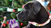 Looking for a puppy for the holidays? Better Business Bureau says pet scams are on the rise