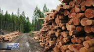 DWYM: Lumber prices tumble, but houses aren't any cheaper