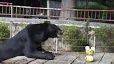 吃相敲可愛 壽山動物園備創意柚子餐慶中秋 | 蘋果新聞網 | 蘋果日報