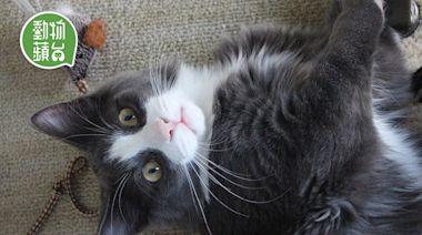 老貓照顧|忽然跑跑跳跳胃口好? 可能是貓甲狀腺功能亢進病徵 | 蘋果日報