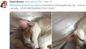 20 People Share Their Cabin Fever Moments In Hilarious Tweets
