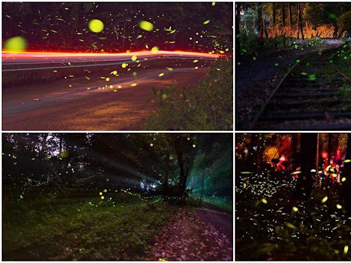 今年不要再錯過!北中南8處美拍賞螢祕境,第8處還能看到滿天銀河